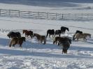 Koppelgang im Schnee